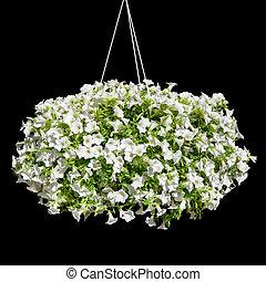 Flores de Petunia