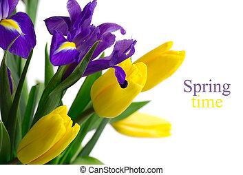 Flores de primavera, tulipanes amarillos e iris azules