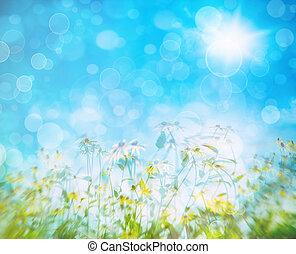 Flores de verano contra un cielo azul