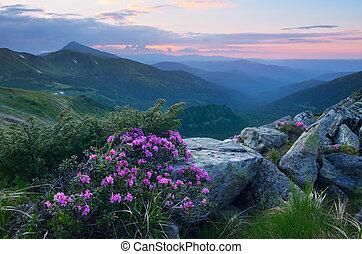 Flores de verano en las montañas