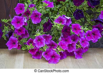 Flores decorativas petunia