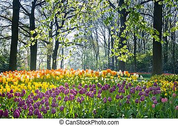 flores del resorte, luz, abril