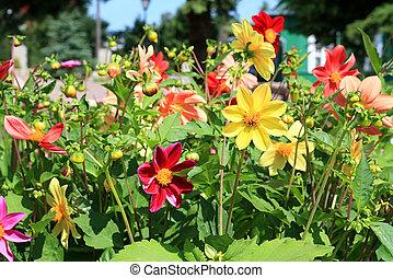Flores en el césped