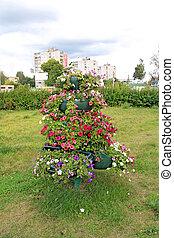 Flores en el césped de la ciudad decorativa