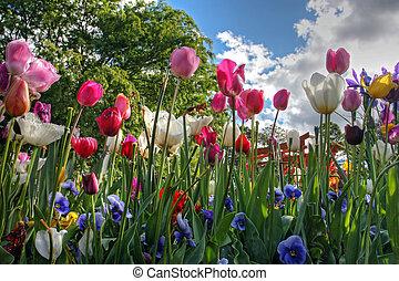 Flores en primavera