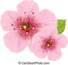 flores, flor, cereza