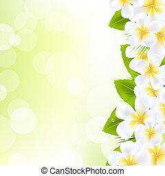 flores, frangipani, hoja
