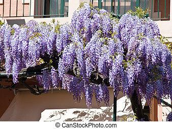 flores, glicina