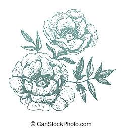 Flores. Ilustraciones a mano