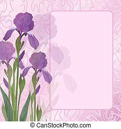 Flores iris sobre fondo rosa