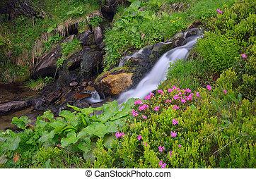 Flores junto a un arroyo