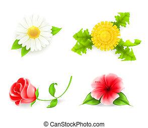 Flores listas, 10eps