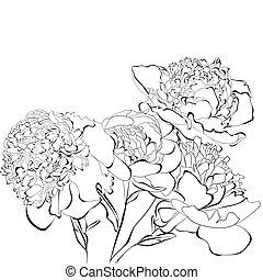 flores, peonía