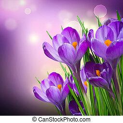 flores, primavera, azafrán