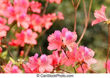 Flores rosas de fondo