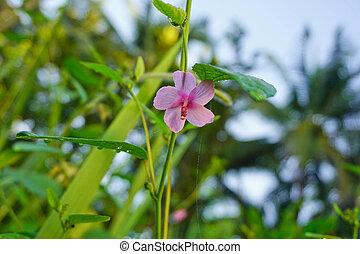 Flores rosas de fondo verde