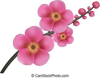 flores, sakura