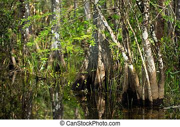 Flores silvestres y baúles ciprés en el pantano de Florida