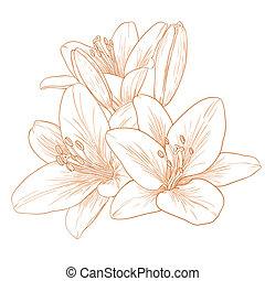 Flores Vector lirios.