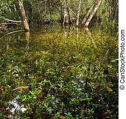 Florida Marsh en fakahatchee Strand