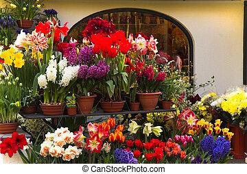 florista, tienda, flores, primavera