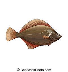 Flounder, ilustración aislada