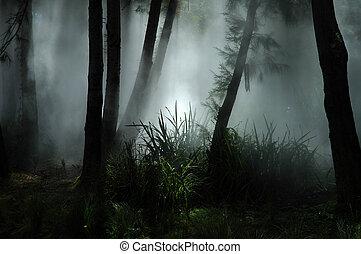 Fog en el bosque