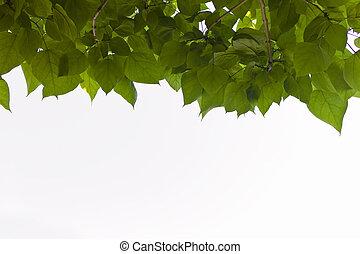 Foliage de un árbol