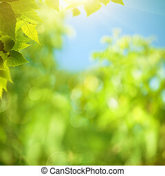 Foliage de verano, antecedentes naturales abstractos