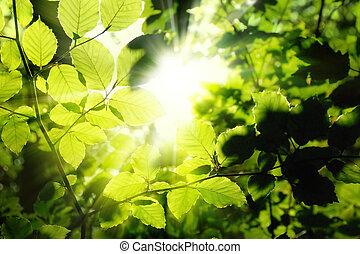 Foliage enmarcando el sol