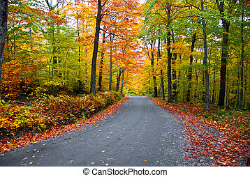follaje, otoño