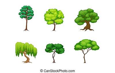 follaje, verde, tronco, conjunto, árboles, vector, exuberante