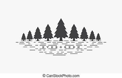 fondo., árbol hoja perenne, vector, ilustración, blanco