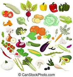 fondo., aislado, vegetales, conjunto, graphics., blanco, vector