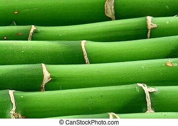 Fondo bambú número dos