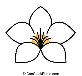 fondo blanco, flor, alamanda, planta, logotipo