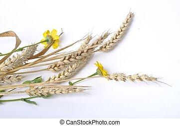 fondo dorado, margaritas, trigo, blanco