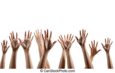 fondo., gente, aislado, arriba, blanco, han, vario, manos, muchos