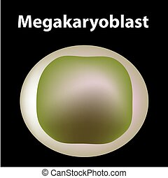 fondo., tallo, megakaryocyte, sangre, plaquetas, aislado, célula, platelets., cell., estructura, vector, megakaryoblast., myeloid, infographics., ilustración