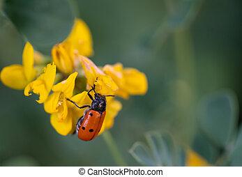 fondo velado, flor, encima, bicho, amarillo