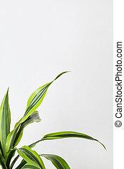 fondo verde, frontera, página, blanco, hojas, ángulo