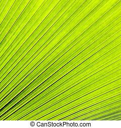 fondo verde, hoja