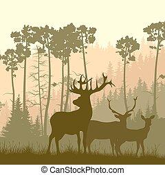 forest., alce, borde, salvaje
