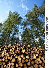 forest., corte, recientemente, árboles, pila
