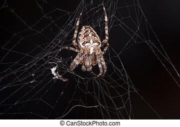 Foto de araña esperando a su presa