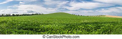 Foto panorámica de campo de soja verde