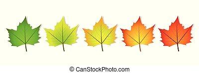 Fotosíntesis, cinco hojas llenas