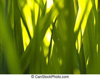 Fotosíntesis de hierba