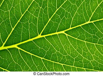 Fotosíntesis