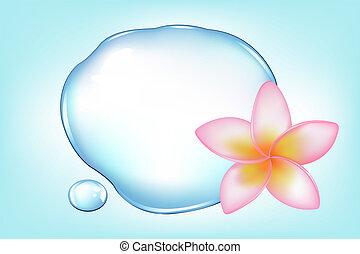 Fragipani sobre el agua